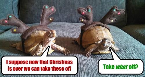 christmas reindeer antlers turtles holiday - 8413113600