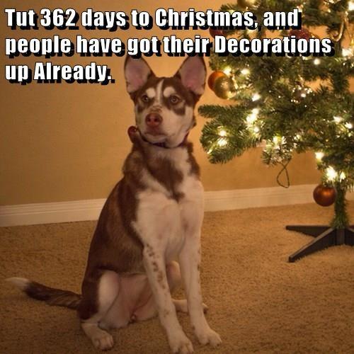animals dogs christmas tree Cats - 8413219328