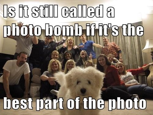 animals photobomb dogs family - 8413469184