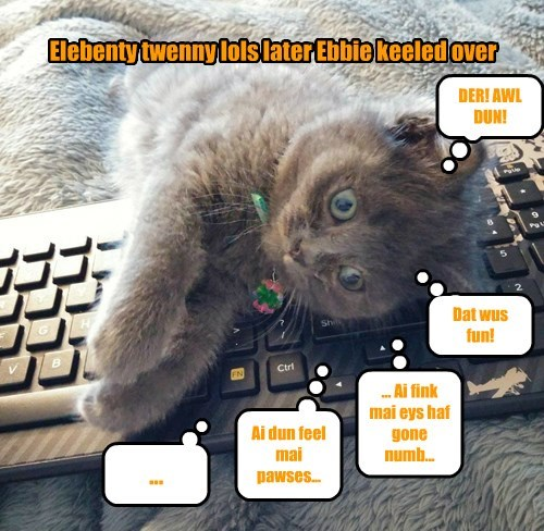 Cats,lolcat,the internets