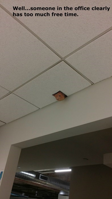 monday thru friday free time coworkers ceiling cat - 8413747456