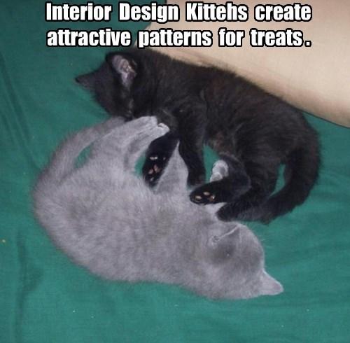 treats kitten Cats - 8413754368