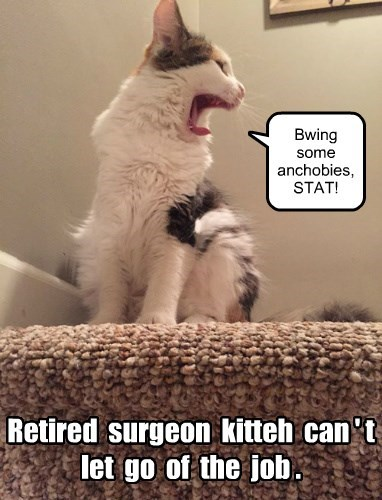 lolcats - Cat - Bwing some anchobies, STAT! Retired surgeon kitteh can't let go of the job.