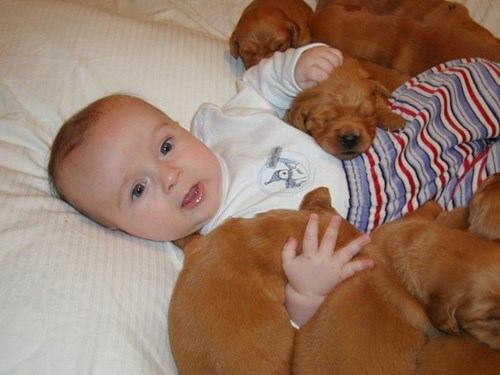 dogs,baby,puppy,cute,parenting