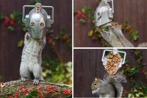 upgrade squirrel cybermen nuts