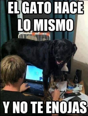 bromas perros Memes animales - 8413974272