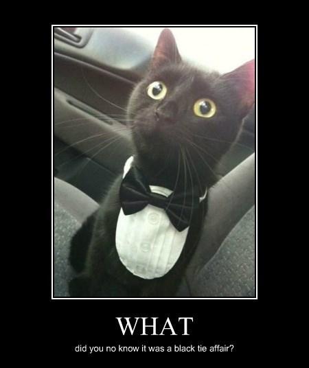 tuxedo funny black cat - 8414135040