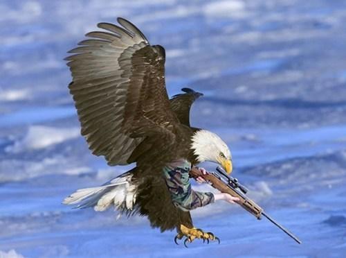 guns wtf bald eagles america - 8414174720