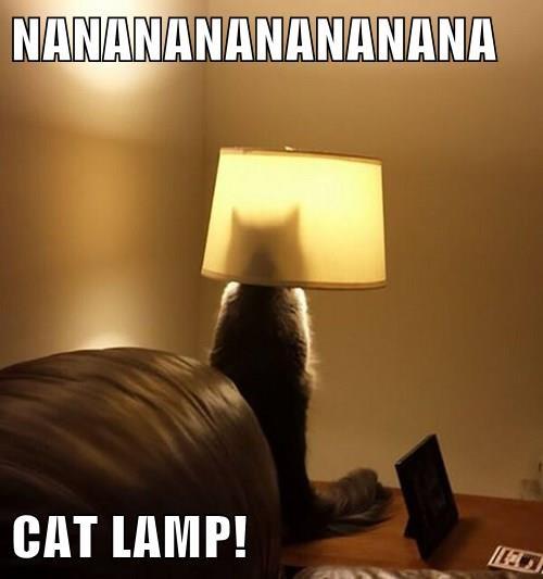 animals Cats captions funny - 8414308608