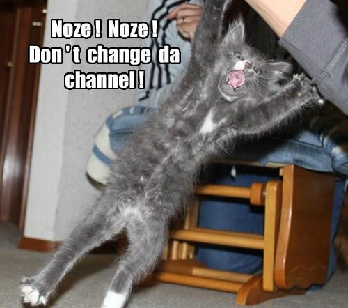 lolcats - Cat - Noze! Noze Don't change da channel!