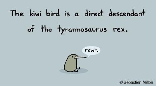 tyrannosaurus rex evolution kiwi bird funny - 8414776576