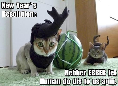 costume wtf new year What is happening resolution Cats