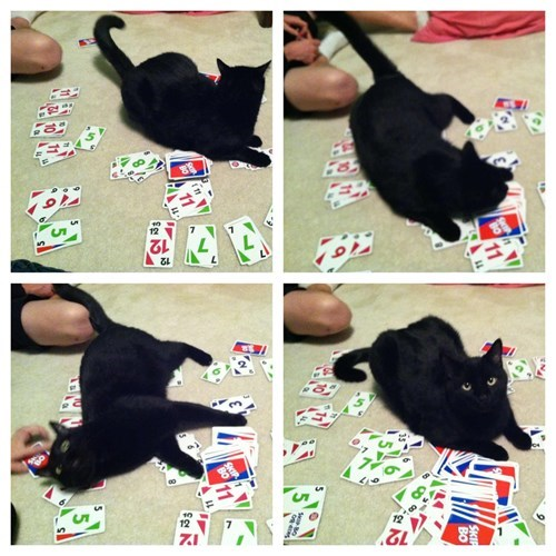 uno black cats destroy Cats
