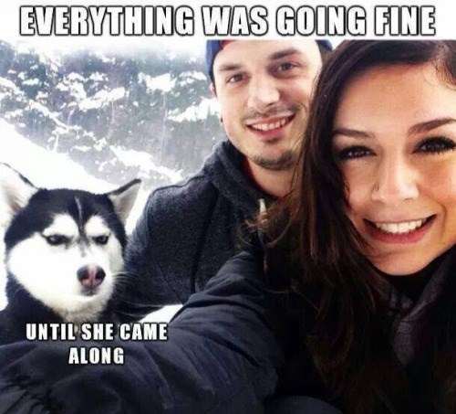 dogs,girlfriend,angry,third wheel,funny