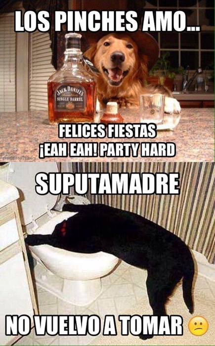 bromas perros Memes animales - 8415409152