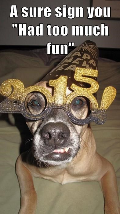 animals dogs what happened new year 2015
