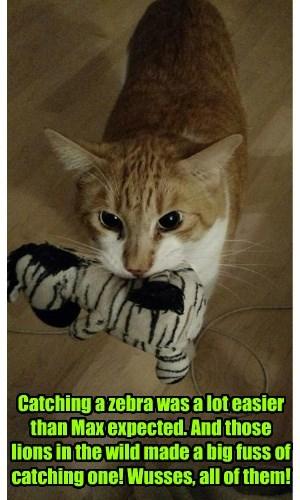 zebra lions cat caption - 8415553024