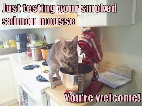test noms Cats - 8415577088
