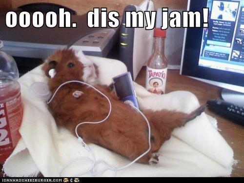 animals guinea pig dance jam - 8415604480