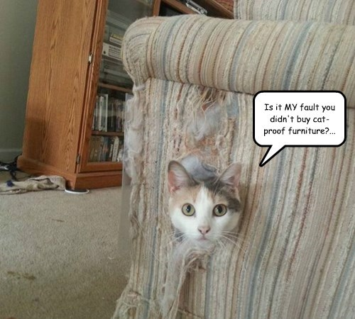 captions puns Cats funny - 8415691008