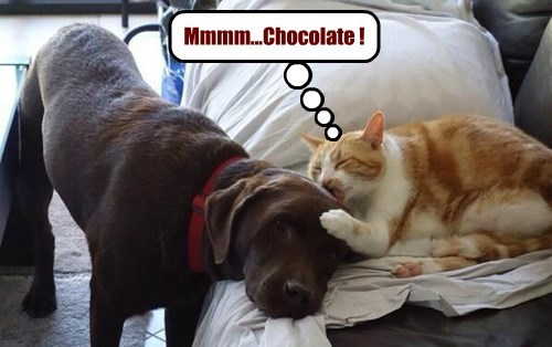 dogs noms Cats chocolate lab - 8415849984
