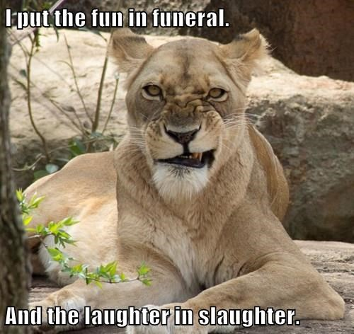 lioness,laughter,caption,funny