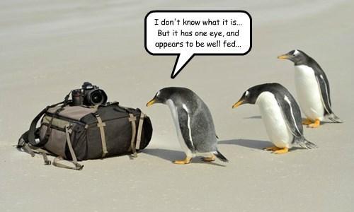 wtf camera penguin - 8416058880