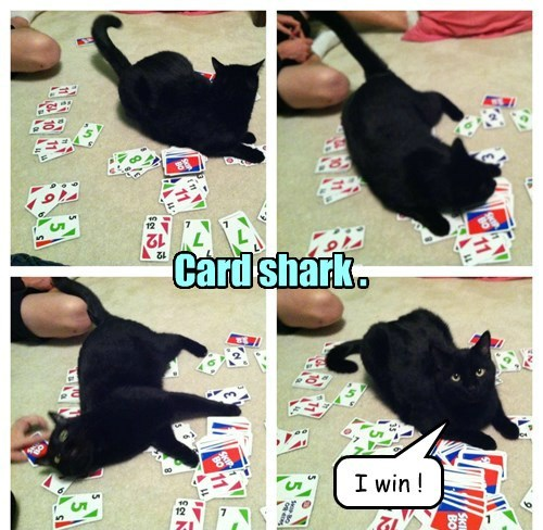 basement cat,cards,Cats,black cat