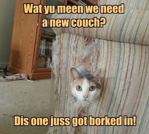 in cat broke new couch just caption need - 8416257536