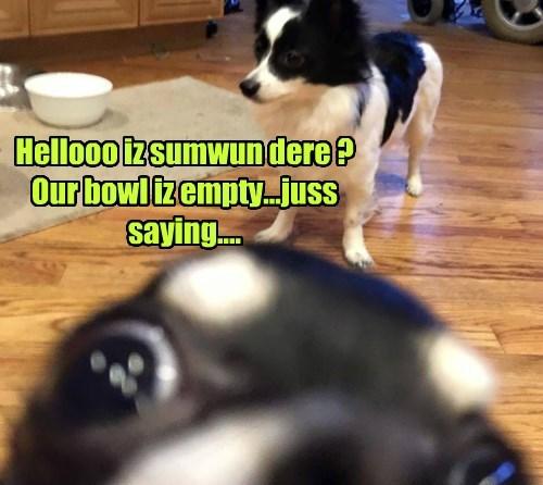photobomb dogs noms - 8416861952