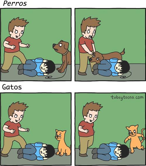 gatos bromas viñetas perros animales - 8416872192