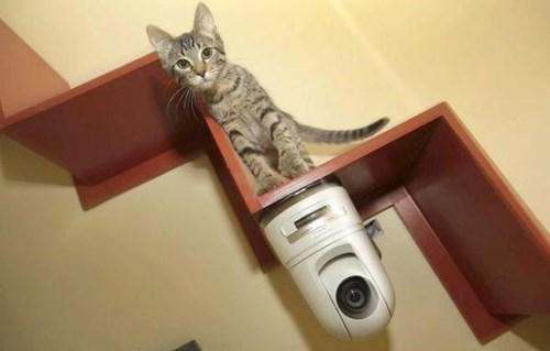 security,kitten,camera