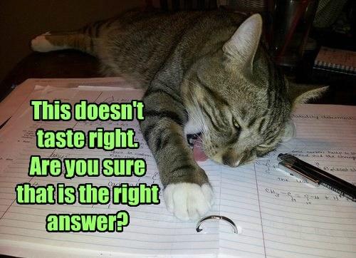 homework tongue Cats - 8416880384