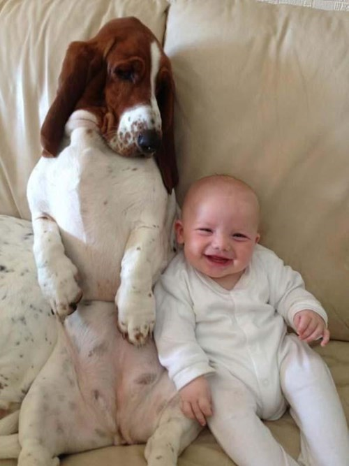 baby cute dogs happy parenting