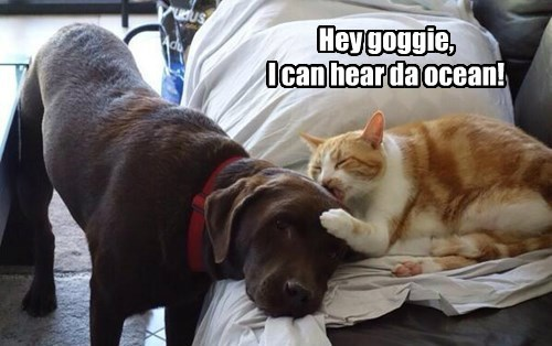 dogs ocean jerk Cats - 8417083392