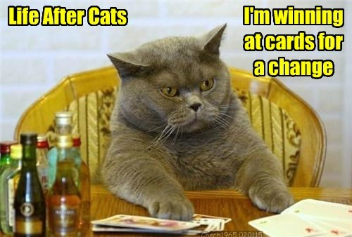 Life After Cats I'm winning at cards for a change Chech1965 020115