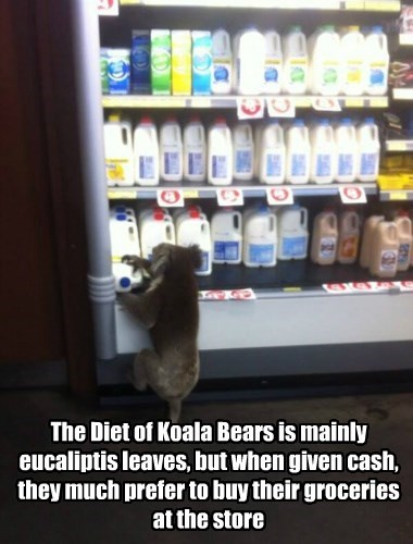 milk,koala,science,noms