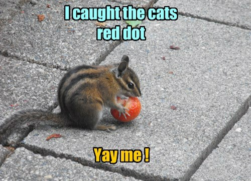 red dot,squirrel,Cats