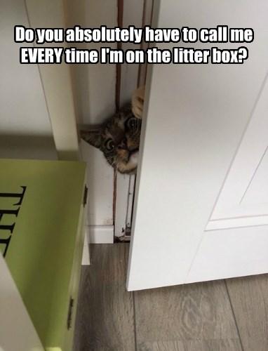 captions Cats funny - 8417705472