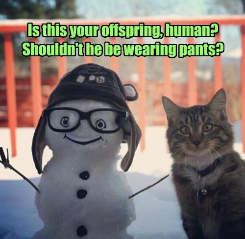 captions Cats funny - 8417758976