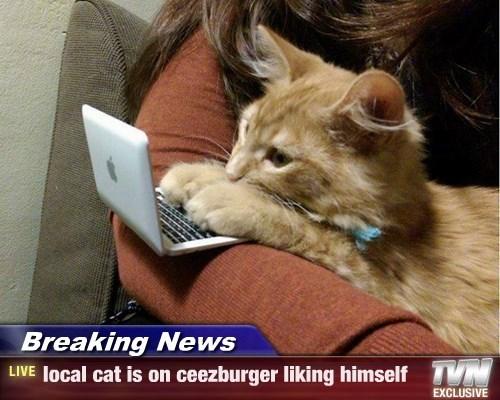 Cheezburger Image 8417930752