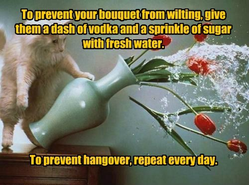 To prevent your bouquet from wilting, give them a dash of vodka and a sprinkle of sugar with fresh water. To prevent hangover, repeat every day.
