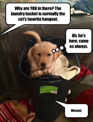 laundry dogs captions funny - 8418161920
