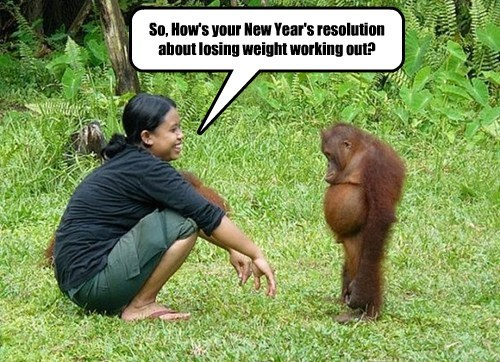 new year resolution monkey rude - 8418245632