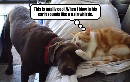 This is totally cool. When I blow in his ear it sounds like a train whistle.
