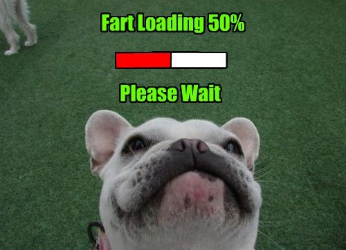 wait dogs please caption fart loading - 8418269184