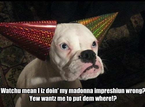 dogs,impression,wrong,caption,Madonna