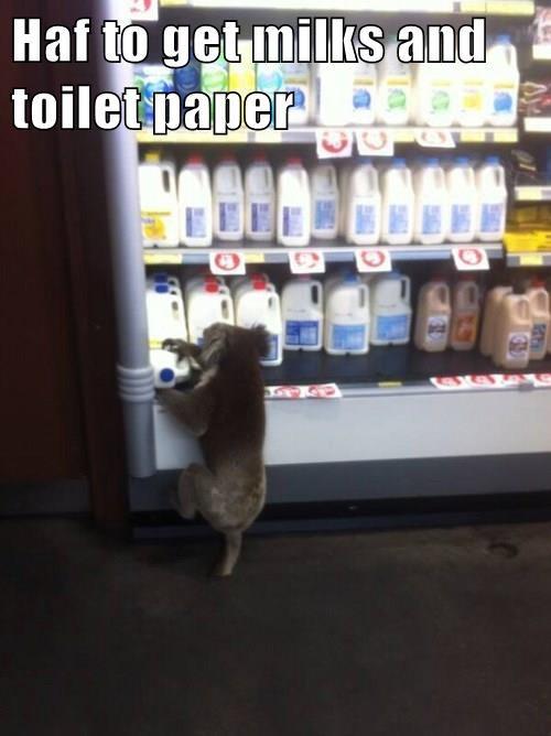 animals groceries milk koala noms - 8418349568