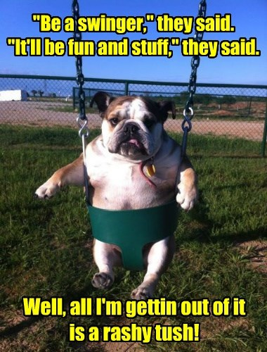 dogs bulldog swinger