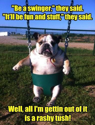 dogs bulldog swinger - 8418370304